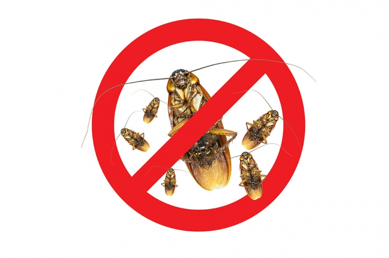 Pest Control – recognise the signs of cockroach infestation in your commercial premise